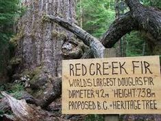 Image result for RED CREEK FIR TRAIL Trail, Red, Image