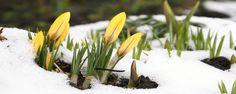 """""""Maart roert zijn staart"""", ook dit jaar?"""