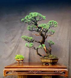 Bonsai Tree Types, Indoor Bonsai Tree, Bonsai Plants, Bonsai Garden, Air Plants, Bonsai Trees, Aztec Art, Home Garden Design, Renaissance Art