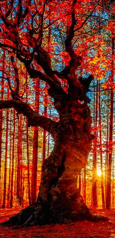 Autumn Forest #red #color #yellow