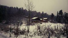 #Krasnoyarsk#myphoto#forest#hunting
