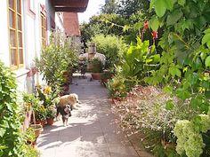 Na zahradě je spousta rostlin zasazených jak přímo do země, tak velký počet těch, které majitelka pěstuje v hrncích.