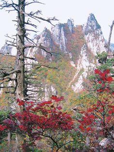 South Korea       [가을 느낌 단풍] 설악산 공룡능선~천불동계곡 > 지역명산 | ▒ 펀부산 - 부산일보 맛집,산들산들,해피존,문화관광,축제포털,갤러리,이슈&토크 ▒ Autumn In Korea, Permaculture Design, Autumn Nature, Korean Art, Historical Images, Natural Disasters, View Image, Beautiful Landscapes, Art Pictures