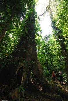 Hiking Corcovado National Park // Explorando el Parque Nacional Corcovado #CostaRica Photo/Foto Andrés Madrigal