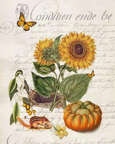 Paper Harvest Sunflower Botanical 3 Print