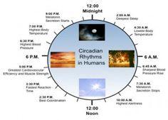 Yin En Yang, Body Clock, Sleep Issues, Sleep Remedies, Natural Sleep, How To Get Sleep, Nikola Tesla, Sleep Deprivation