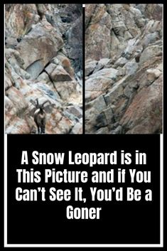 A Snow Leopard is in This Picture and if You Can't See It, You'd Be a Goner Awesome Wow, Amazing, Funny Comedy, The Hard Way, Weird World, Snow Leopard, Wtf Funny, See It, Weird Facts