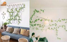 吊兰和绿萝要看吐了,搞点更有趣的垂吊植物吧