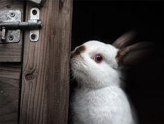 sweet_rabbit