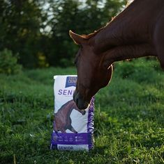 The first week of fall means we're that much closer to winter! Be sure your senior horse is ready for cold weather with Triple Crown's senior feed solutions. #ad