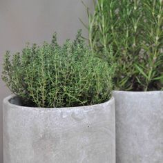 Cache pot / Pot en Béton - Le Repère des Belettes
