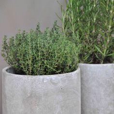 images about Pflanztöpfe Concrete Planters