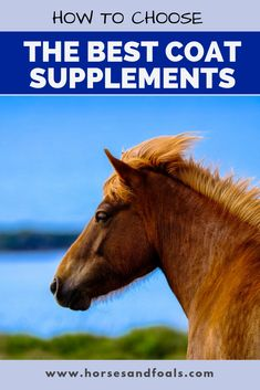 Looking for the best coat supplement for horses on the market in Here are 3 top rated recommended coat supplements that you can buy online today. Horse Stalls, Horse Barns, Horses, Western Horse Tack, Western Saddles, Les Fables, Horse Care Tips, Horse Feed, Horse Training Tips
