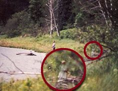 Even if you don't believe in paranormal phenomena like ghosts or Bigfoot, these photos will make you think twice. Catch a glimpse of some spooky pictures. Real Ghost Pictures, Ghost Images, Ghost Photos, Creepy Photos, Scary Stories, Ghost Stories, Aliens, Ghost Hauntings, Ghost And Ghouls