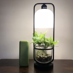 My new bedside table lamp, much aesthetic Grow Lamps, Bedside Table Lamps, My Room, House Plans, Internet, Vase, Decorating, Plants, Products