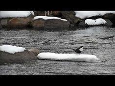 Koskikara Penguins, Winter, Animals, Winter Time, Animales, Animaux, Penguin, Animal, Animais