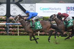 McCreery (GB) 2012 Br.g. (Big Bad Bob (IRE)-Dolma (FR) by Marchand de Sable (USA) 1st ATC Liverpool City Cup (AUS-G3,1300mT,Randwick) (photo: Racing and Sports)