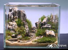 Size of tank is cm x 7 cm x cm Plant list: Nano moss - Amblystegium serpens Mini pellia - Riccardia sp. Aquascaping, Aquarium Aquascape, Aquarium Terrarium, Aquarium Landscape, Nature Aquarium, Aquarium Fish Tank, Planted Aquarium, Fish Tanks, Aquarium Design