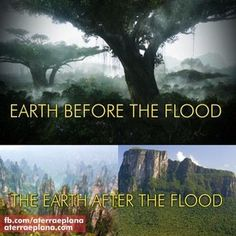 GIANT TREES BEFORE THE FLOOD! No Trees on Flat Earth-Biblical Perspective  – Flat Earth Science and the Bible