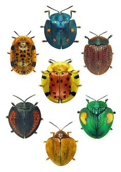 Beetles with Beautiful Color Combinations - From the pinboard BUGS -n- Butterflies by Bob Smith, which has amazing pins worth checking out