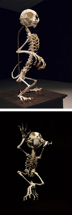 Animatus: Realistic Skeletons of Famous Cartoon Characters by Hyungkoo Lee | Inspiration Grid | Design Inspiration