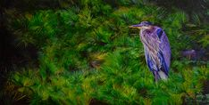 Northern Reflections Teresa Thompson Oakville Gray Jay, Canadian Nature, River Otter, Fine Art Photography, Reflection, Wildlife, Canvas, Painting, Animals