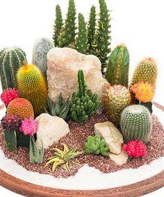 Love This Six Piece Assorted Cactus Set On #zulily! #zulilyfinds  #cactusgarden