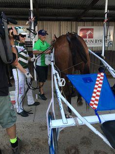 Harness Racing, Trotter, Tack, Baby Strollers, Horses, American, Children, Animals, Wheelbarrow