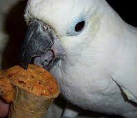Joey the Cockatoo