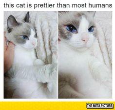 Prettiest Cat Ever