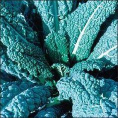 Seed Savers Exchange 623 Organic Open-Pollinated Kale Seeds, Lacinato by Seed Savers Exchange, http://www.amazon.com/dp/B003HWH80S/ref=cm_sw_r_pi_dp_dIrYrb0ZJRKWT