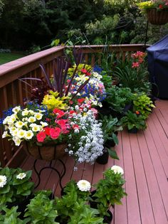 I like to surround my back porch with summer annuals.