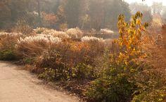 Erbe autunno alla luce - RHS Garden Wisley