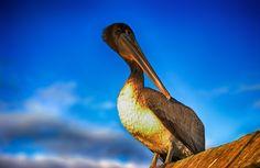 #Pelican HDR