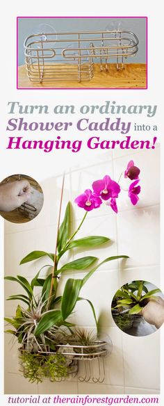 Turn a Shower Caddy into a Vertical Garden- for the grown up bathroom