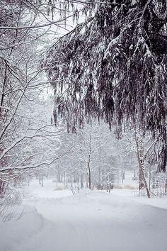 Winter Path by JoyHey, via Flickr