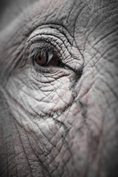Into the soul of an Elephant