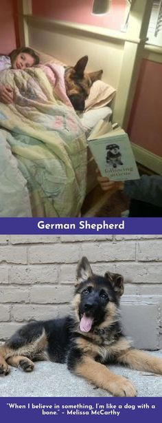 Check out the webpage to see more about German Shepherds Just click on the link to get more information