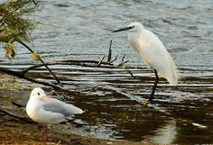 little egret World Wetlands Day, Personal Reference, Count, Bird, Architecture, Animals, Arquitetura, Animales, Animaux