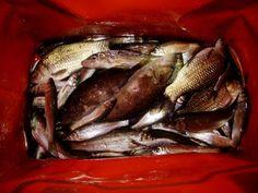 i love fishg 3
