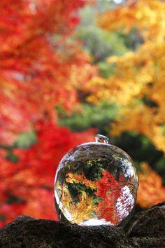 Crystal Autumn Reflection