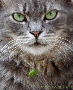 © copyright Marco Galli. Cape diem. Con gatto Codone. https://www.facebook.com/ilgatto72?hc_location=timeline