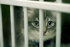 New prison fostering program pairs felons with felines: http://yhoo.it/IpmW3v Aww