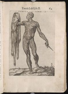 Juan de Valverde ' La anatomia del corpo umano  (https://pinterest.com/pin/287386019947532848).  Ta. I. Lib. II. Enlarge: https://pinterest.com/pin/287386019941610194