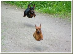 Funny running dogs