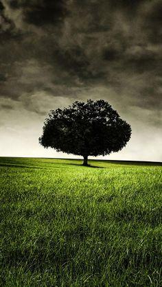 Grassland, Tree