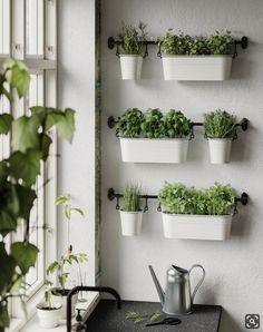 ikea plants herbs in kitchen Herb Garden In Kitchen, Kitchen Plants, Home Decor Kitchen, Kitchen Interior, Home And Garden, Kitchen With Plants, Herbs Garden, House Plants Decor, Plant Decor