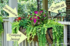 Hometalk | Best Plants for Hanging Baskets. love this window boxes. this article s ays there are coleus that are sun loving areas.  saw these wire boxes. at ross for $17. beautiful.
