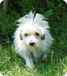 Little Rock, AR - Terrier (Unknown Type, Medium). Meet Polly, a dog for adoption. http://www.adoptapet.com/pet/10993530-little-rock-arkansas-terrier-unknown-type-medium