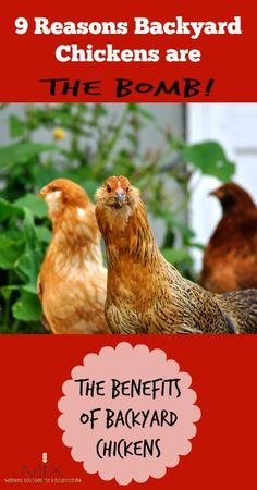 9 Reasons to Backyard Chickens Are The BOMB! The Benefits of Backyard Chickens | http://www.mixwellness.com